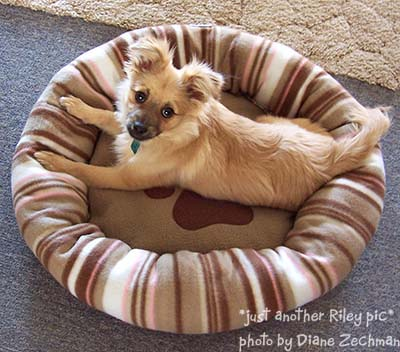 riley-new-bed-09.jpg